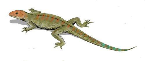 hylonomus - 爬虫類飼育のススメ