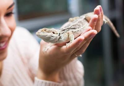 【日本全国の一覧あり】可愛い爬虫類と触れ合いたい!爬虫類カフェまとめ - 【日本全国の一覧あり】可愛い爬虫類と触れ合いたい!爬虫類カフェまとめ