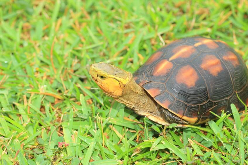 日本に生息する爬虫類、両生類たち - 日本に生息する爬虫類、両生類たち
