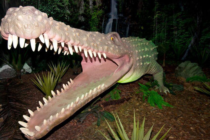 ディノスクス - 生きた化石といわれる爬虫類・両生類