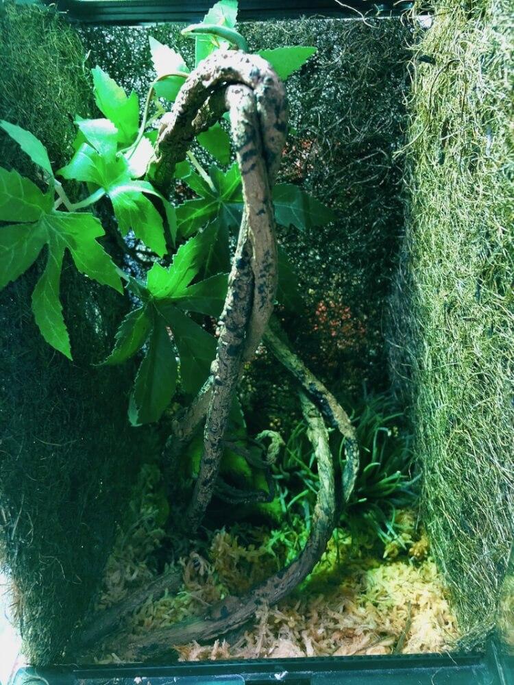 IMG_1632 - 殺風景のケージを手軽に簡単にジャングルに変える方法