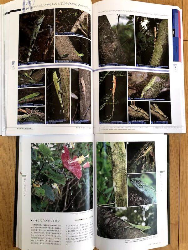 IMG_1843 - 2018年8月7日刊行の日本の爬虫類・両生類 生態図鑑