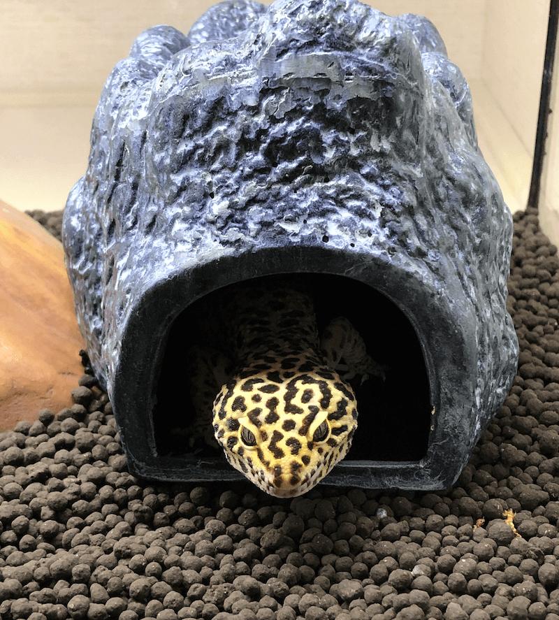 moistrock4 - 爬虫類専用のウェットシェルター【モイストロック】を徹底解説!