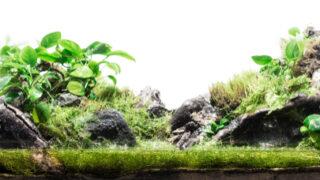 ハニーワームの飼育と繁殖を詳しく解説!餌・温度・床材まで網羅 - ハニーワームの飼育と繁殖を詳しく解説!餌・温度・床材まで網羅