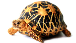 飼育者なら知っておきたい!レオパの野生下での生息環境について - 飼育者なら知っておきたい!レオパの野生下での生息環境について