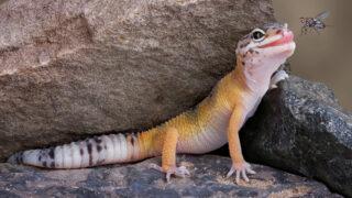 【まとめ】美女が勢揃い!爬虫類を飼育している爬虫類女子まとめ - 【まとめ】美女が勢揃い!爬虫類を飼育している爬虫類女子まとめ