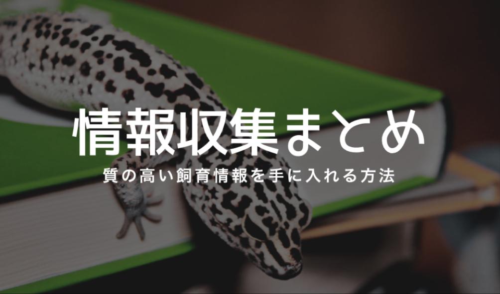 爬虫類の情報収集方法まとめ