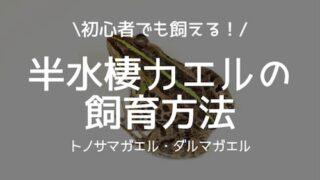 半水棲カエルの飼育方法
