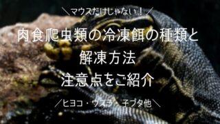 ワラジムシの捕獲と飼育・繁殖方法 簡単に採取できるコツを紹介します - ワラジムシの捕獲と飼育・繁殖方法 簡単に採取できるコツを紹介します