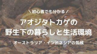 アオジタトカゲの野生下の暮らしと生活環境 - アオジタトカゲの野生下の暮らしと生活環境