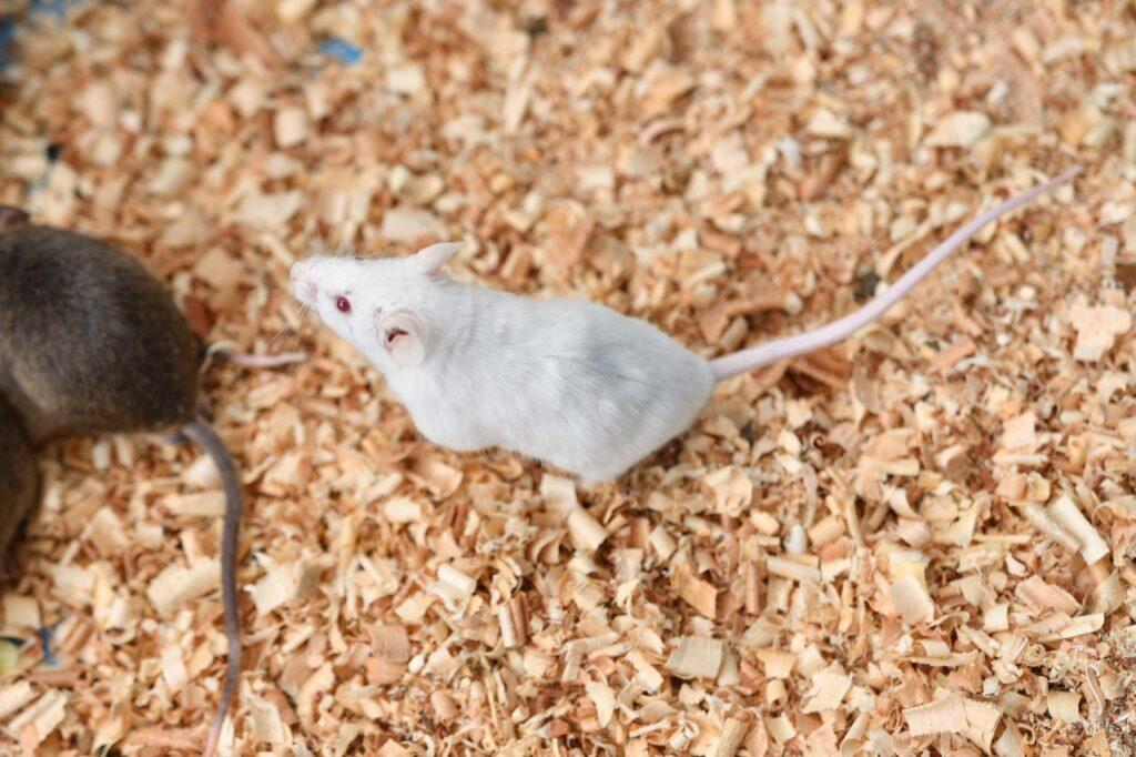 マウスだけじゃない!肉食爬虫類の冷凍餌の種類と解凍方法 注意点をご紹介 - マウスだけじゃない!肉食爬虫類の冷凍餌の種類と解凍方法 注意点をご紹介
