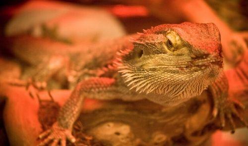 denki-syumiration - 爬虫類の電気代はいくら?器具ごとの消費電力と1ヶ月の費用をシミュレーション