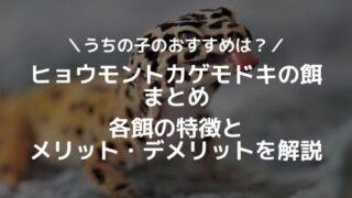 初心者でも飼える!タイガーサラマンダーの飼育方法 - 初心者でも飼える!タイガーサラマンダーの飼育方法