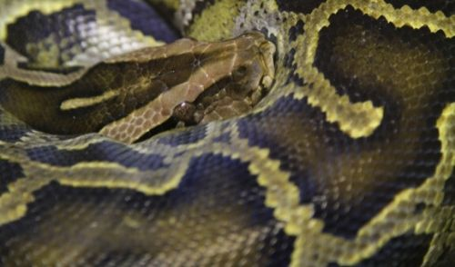 名称未設定のデザイン (2) - 爬虫類が餌を食べない! 考えられる拒食の原因と対策