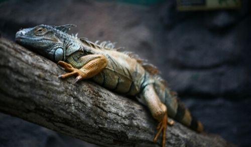 名称未設定のデザイン (2) - 爬虫類を置いて旅行に行って大丈夫?お留守番準備と注意点を紹介