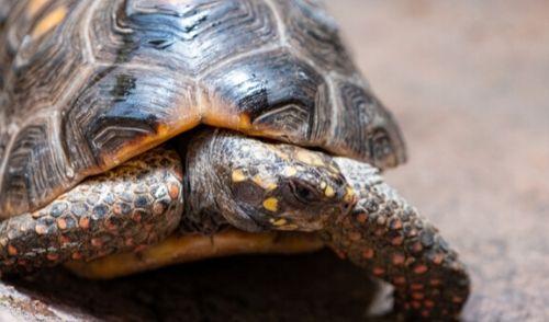 名称未設定のデザイン (3) - 爬虫類が餌を食べない! 考えられる拒食の原因と対策