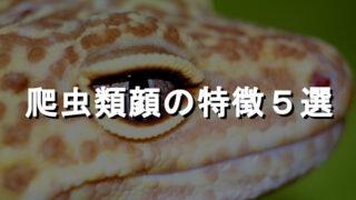 爬虫類顔の特徴5選を、爬虫類専門メディアが解析した。 - 爬虫類顔の特徴5選を、爬虫類専門メディアが解析した。